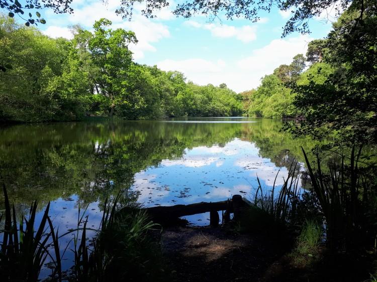 CALPAC Manor Pond Fishery Cobham Surrey